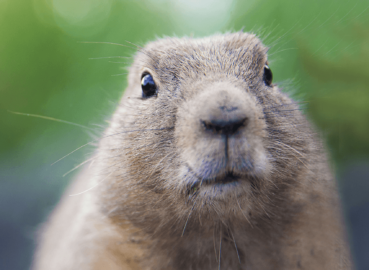 Winter, the Groundhog, and House Cleaning